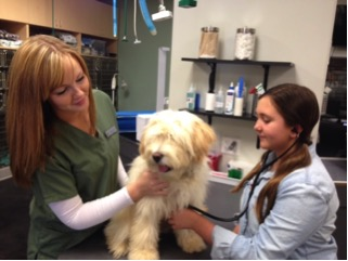 Advanced Veterinary Care of San Elijo is launching our  Pet Awareness Workshop Series for children!
