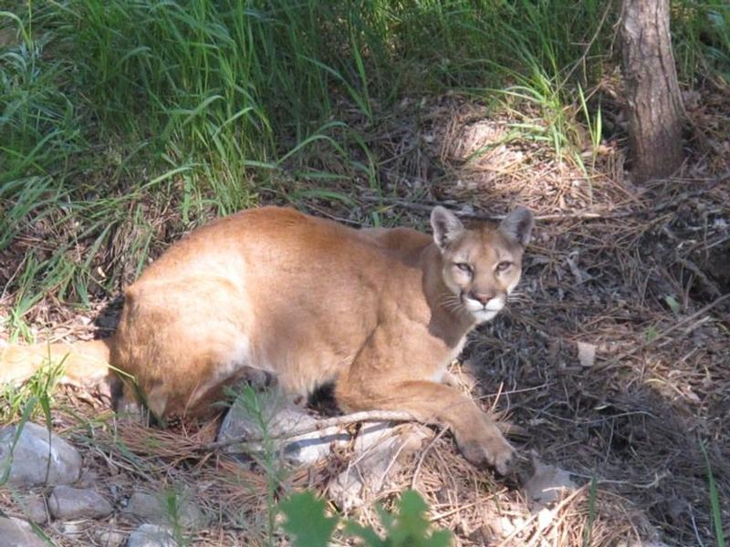 untold stories of the er mountain lion attack synopsis
